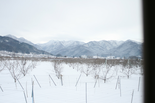 IMG_27車窓にはのんびりとしたりんご畑が広がる98.JPG