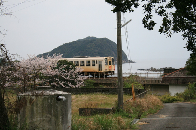 IMG_3337△沿線の桜と阿佐海岸鉄道の列車.JPG
