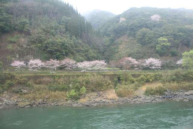 IMG_455JR肥薩線の車窓風景・球磨川の流れと対岸の桜のコントラストも美しい6-min.JPG